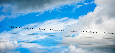 Birds Perching On A Wire Poster by Panoramic Images
