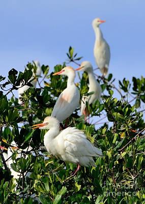 Birds Quartet Poster