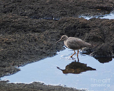 Poster featuring the photograph Bird's Reflection by Belinda Greb