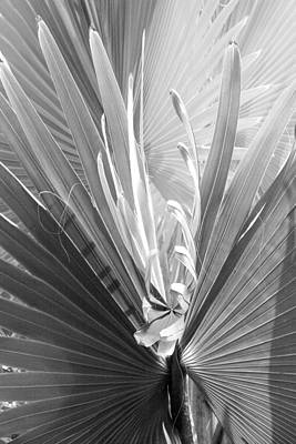 Poster featuring the photograph Bismark Palm by Jim Snyder