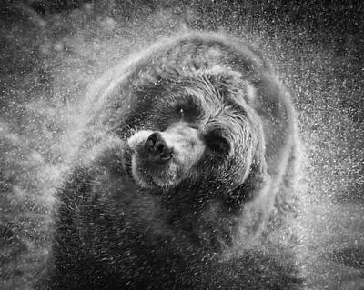 Black And White Grizzly Poster