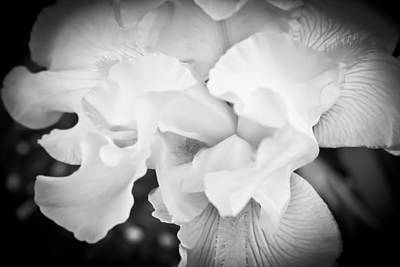 Black And White Hibiscus Poster