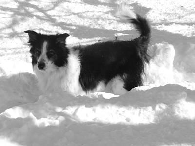 Black And White In The Snow Poster by Michael Porchik