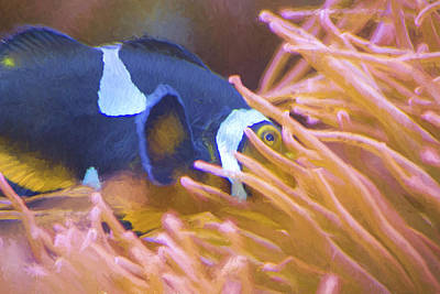 Black And White Ocellaris Clownfish - Painting Poster