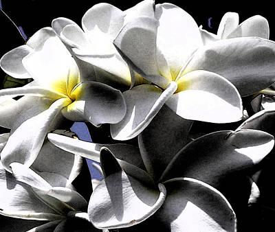 Black And White Plumeria Poster by Karen Nicholson