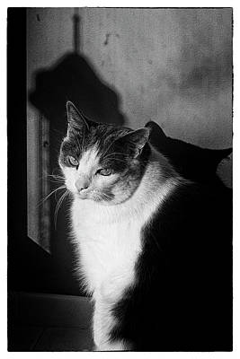 Black And White Portrait Of A Pet Gray Poster by Al Petteway & Amy White