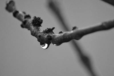 Poster featuring the photograph Black And White Raindrop by Naomi Burgess