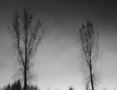 Black And White Reflection Trees Poster
