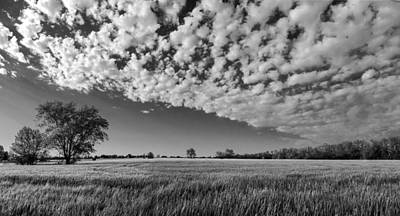 Black And White Wheat Field Poster