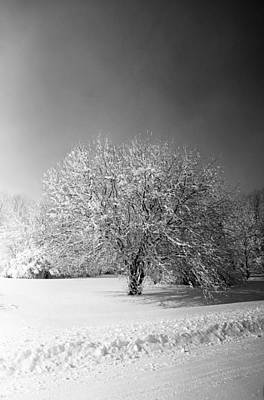 Black And White Winter Poster by Thomas Fouch