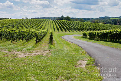 Maryland Vinyard In August Poster by Thomas Marchessault