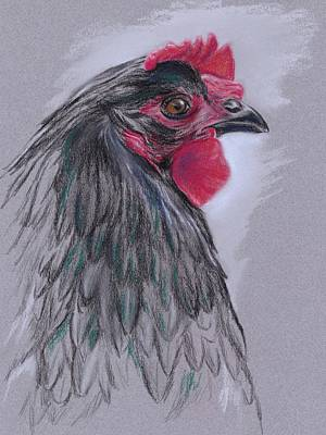 Black Australorp Hen Poster by MM Anderson