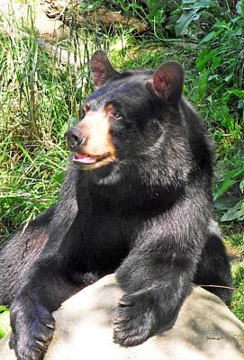 Black Bear Poster