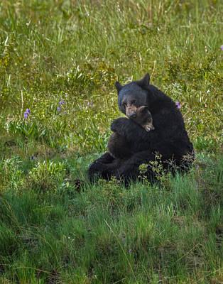 Black Bear Sow Hugging Cub Poster