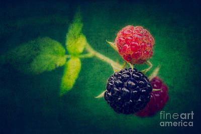 Black Berry With Texture Poster