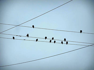 Black Birds Waiting In Blue Poster