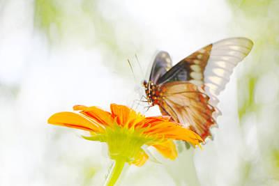 Black Butterfly In Motion II Poster by Olivia Novak