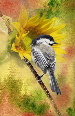 Black Capped Chickadee Checking Out The Sunflowers Poster