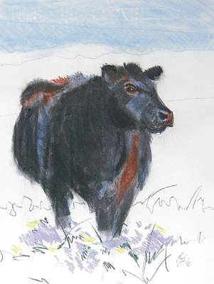Black Cow Drawing Poster