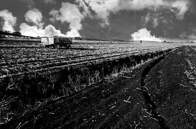 Black Dirt Harvest Poster