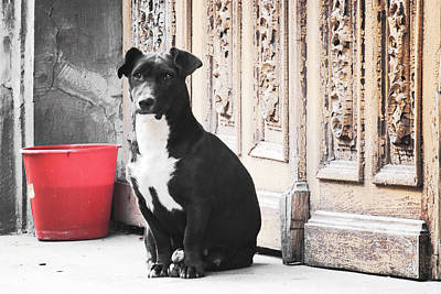 Black Dog Guarding A Vintage Wooden Door Poster