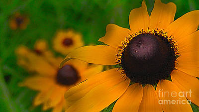 Black Eyed Susan Poster by Brittany Perez