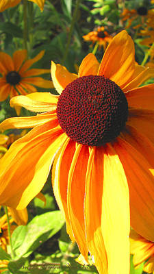 Poster featuring the photograph Black-eyed Susan In Your Face by Brooks Garten Hauschild