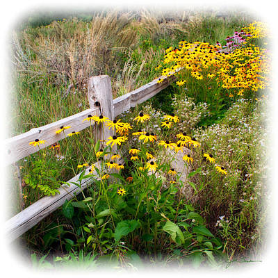 Black Eyed Susan Flowers Near Rustic Garden Fence Poster