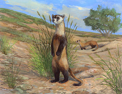 Black-footed Ferret Poster by ACE Coinage painting by Michael Rothman