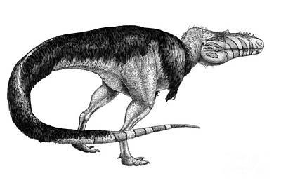 Black Ink Drawing Of Alioramus Remotus Poster by Vladimir Nikolov