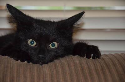 Black Kitten Poster