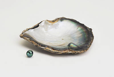 Black-lipped Pearl Oyster And Black Pearl Poster by Dorling Kindersley/uig