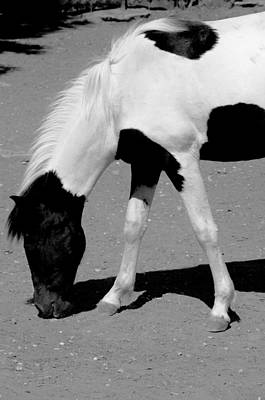 Black N White Horse Poster