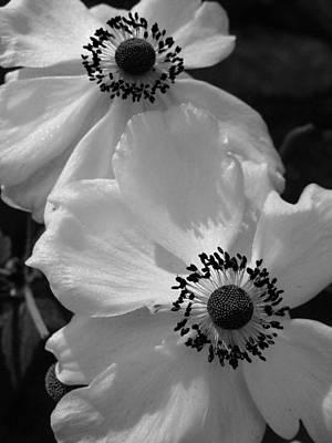 Black On White Poster by Cheryl Hoyle