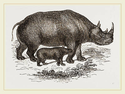 Black Rhinoceros And Young Poster by Litz Collection