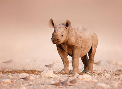 Black Rhinoceros Baby Poster