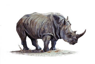 Black Rhinoceros Poster