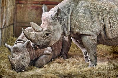 Black Rhinos 1 Poster by Ed Churchill