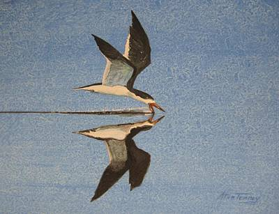 Poster featuring the painting Black Skimmer by Stan Tenney