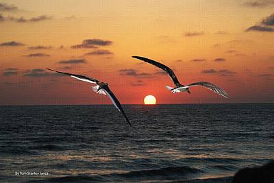 Black Skimmers At Sunset Poster by Tom Janca