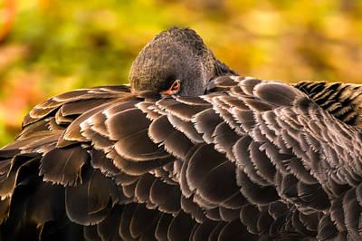 Black Swan Poster by Yuri Fineart