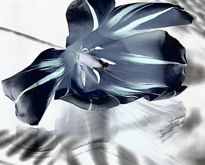 Black Tulip Poster