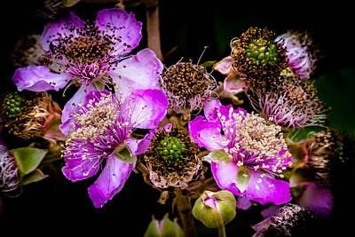 Blackberry Flower Poster by Edgar Laureano