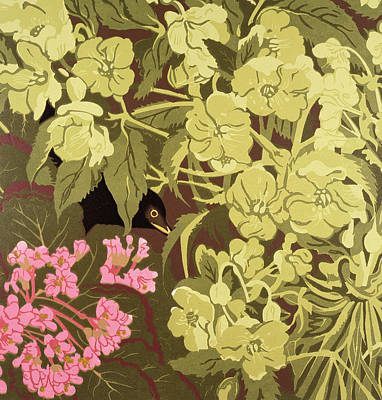 Blackbird In The Hellebores Poster by Carol Walklin