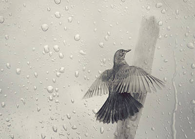 Blackbird In The Rain Poster by Heike Hultsch