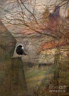 Poster featuring the photograph Blackbird by Liz  Alderdice