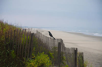 Blackbird On A Fence On The Beach Poster by Bill Cannon