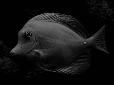 Blackened Fish Poster by Wendy J St Christopher
