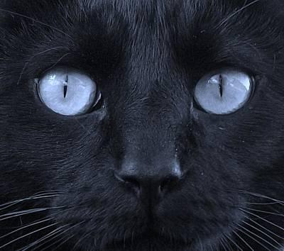 Blackie Blue Poster