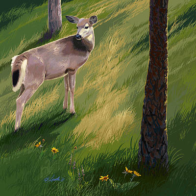 Blacktail Doe In Springtime Poster